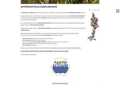 pantin-herba-becerra-antirrhinum-majus-subsp-linkianum